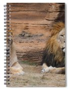 African Lion Couple Spiral Notebook