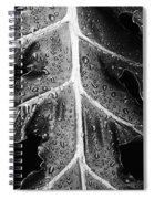 After The Rain - Bw Spiral Notebook