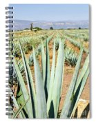 Agave Cactus Field In Mexico Spiral Notebook