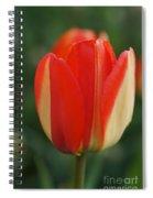 All Alone Spiral Notebook