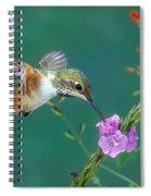 Allens Hummingbird Spiral Notebook