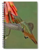 Allens Hummingbird Feeding Spiral Notebook