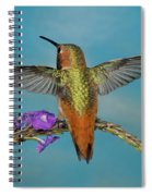 Allens Hummingbird Male Spiral Notebook