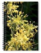 Allium Flavum Or Fireworks Allium Spiral Notebook