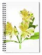 Alstroemeria Flowers Against White Spiral Notebook