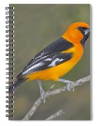 Altamira Oriole Spiral Notebook