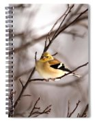 American Goldfinch In Winter Spiral Notebook
