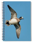 American Wigeon Drake Spiral Notebook