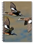 American Wigeon Drakes Spiral Notebook
