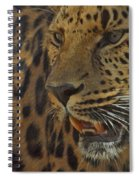 Amur Leopard 1 Spiral Notebook