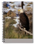 An Eagle Perched   Spiral Notebook