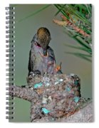 Annas Hummingbird Feeding Young Spiral Notebook