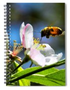 Apple Blossom And Honey Bee Spiral Notebook