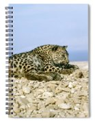 Arabian Leopard Panthera Pardus 1 Spiral Notebook