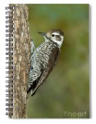 Arizona Woodpecker Spiral Notebook