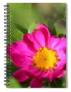 Aster From The Daylight Mix Spiral Notebook