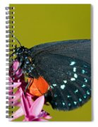Atala Butterfly Spiral Notebook