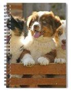 Australian Sheepdog Puppies Spiral Notebook