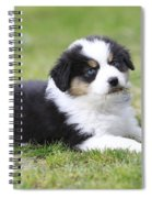 Australian Shepherd Puppy Spiral Notebook