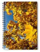 Autumn Splendor 9 Spiral Notebook