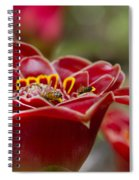 Awapuhi Ko 'oko'o  Torch Ginger - Etlingera Elatior - Phaeomeria Magnifica  Spiral Notebook