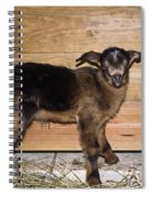Baby Goats Spiral Notebook
