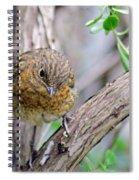 Baby Robin Spiral Notebook