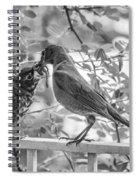 Baby Robin - Yummy Spiral Notebook