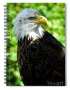 Bald Eagle - Alaska Spiral Notebook