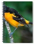 Baltimore Oriole Icterus Galbula Spiral Notebook
