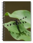 Banded Pennant Dragonfly Spiral Notebook