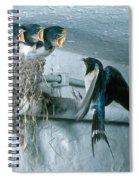 Barn Swallows Spiral Notebook