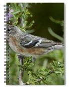 Bay-breasted Warbler Spiral Notebook