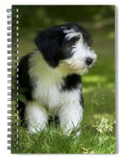 Bearded Collie Puppy Spiral Notebook