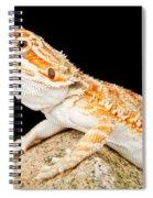 Bearded Dragon Pogona Sp. On Rock Spiral Notebook