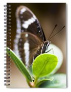 Beautiful Butterfly Spiral Notebook
