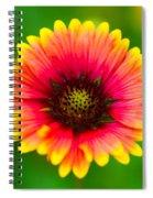 Beautiful Daisy Spiral Notebook