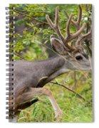 Beautiful Mule Deer Buck With Velvet Antler  Spiral Notebook