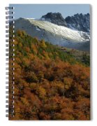 Beech Forest, Chile Spiral Notebook