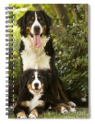 Bernese Mountain Dogs Spiral Notebook