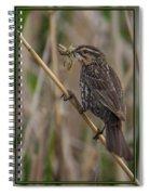 Big Dinner For Female Red Winged Blackbird I Spiral Notebook
