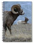 Big Horn Sheep 2 Spiral Notebook