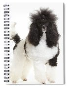Black And White Poodle Spiral Notebook