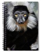 Black And White Ruffed Lemur Spiral Notebook