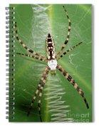 Black And Yellow Garden Spider Spiral Notebook