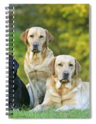 Black And Yellow Labrador Retrievers Spiral Notebook