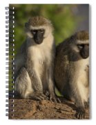 Black-faced Vervet Monkey Spiral Notebook