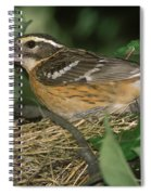 Black-headed Grosbeak Female Spiral Notebook