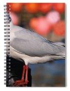 Black-headed Gull Spiral Notebook