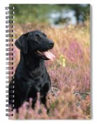 Black Labrador Dog Spiral Notebook